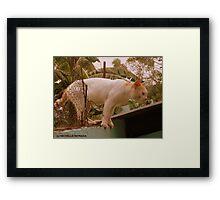 HERMOSO Framed Print