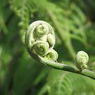 Twirly Fern Frond by RKLazenby