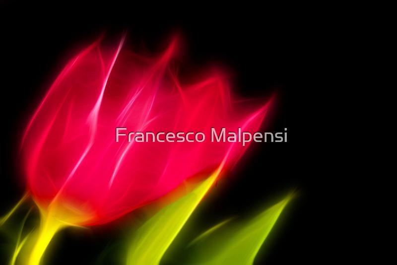 Fading tulips by Francesco Malpensi