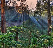 Ray of Light by Dean Prowd Panoramic Photography