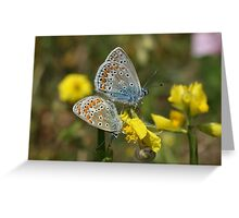 Common Blues Greeting Card