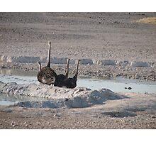 Etosha, Namibia. Photographic Print