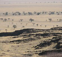 Namibian plains. by Paul Moran