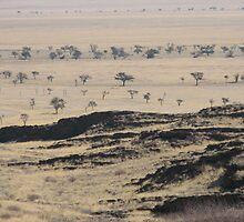 Namibian plains. by Paul Moran