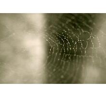 Spider's Web  Photographic Print