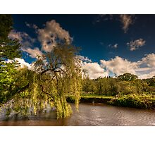 Willow on the Lagan Photographic Print
