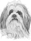Shih-Poo by BarbBarcikKeith