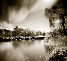 Wind in the Willow by Neil Carey