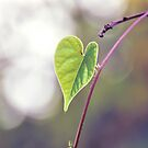 Sign Love From Nature by Komang