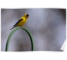 The Golden Finch Arch Poster