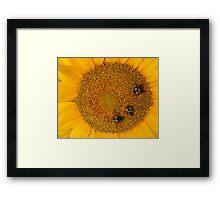 3 Bee Sunflower Framed Print