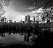 Central Park by Amy Fulford
