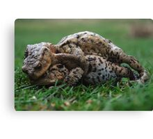 Toad Ball Canvas Print