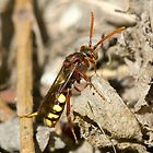 Nomada Bee by theriverrat