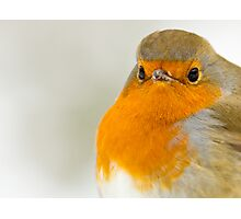 Close-Up of a Robin Photographic Print