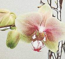 Orchid Distortion by CallinoisArt