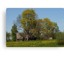 Spring in old farmstead 2  (Yellow trees) Canvas Print