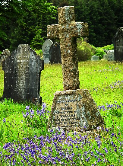 Bluebells in a graveyard, Dartmoor, UK  by buttonpresser