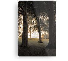 Trees of Castlegrove Metal Print