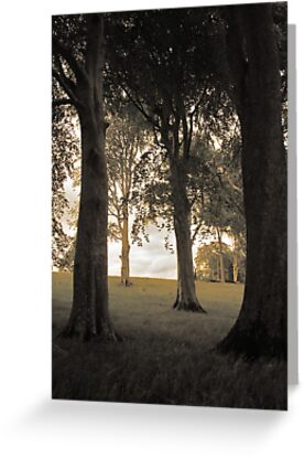 Trees of Castlegrove by Ciaran Sidwell