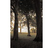 Trees of Castlegrove Photographic Print
