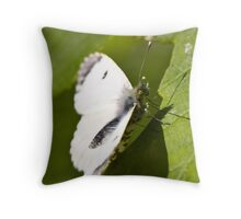 female orange tip butterfly Throw Pillow
