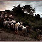 Bringing Home the Cattle, Mexico by Wayne King