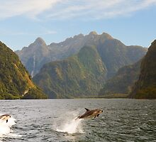 Hall Arm in Doubtful Sound by Yukondick