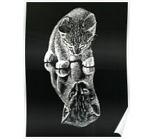 Kitty Cat Poster