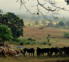CountrySide by Suhas  Shinde