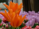 tulips floating above by LisaBeth