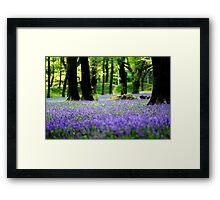 Blue Bells, Blackberry Camp, Devon Framed Print