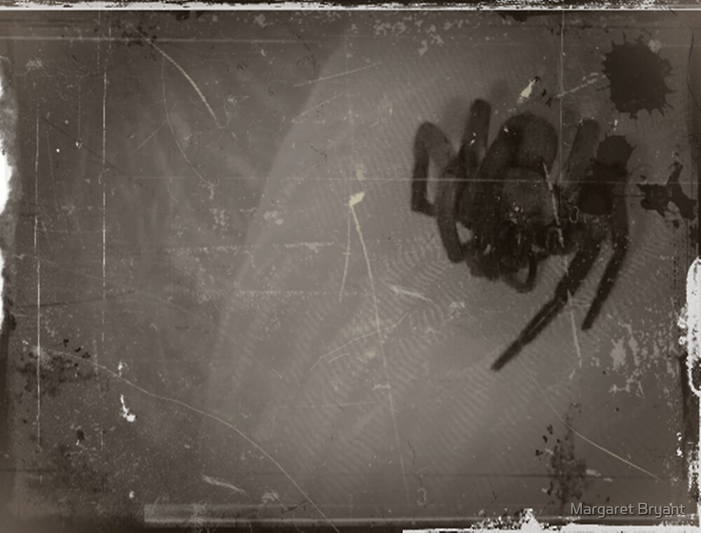 05-12-11:  The Spider  by Margaret Bryant