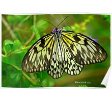 Paper Kite Butterfly Poster