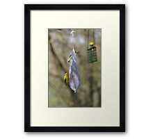 American Gold Finch Framed Print