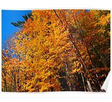 The grandeur of Fall Poster