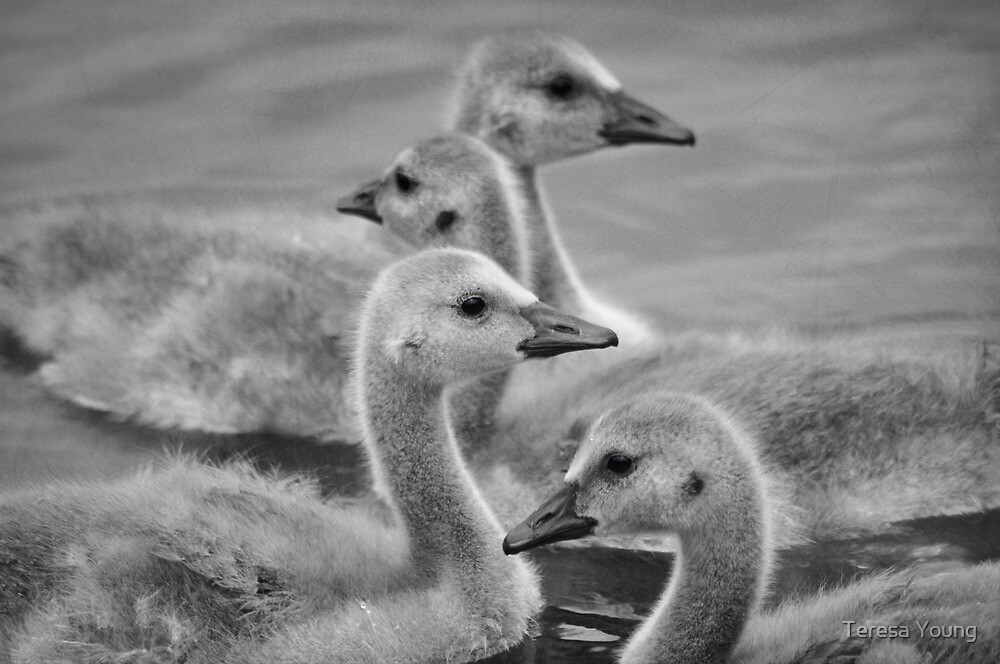 All in a Row by Teresa Young