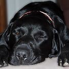 Dog tired!!!! by Shaun Whiteman