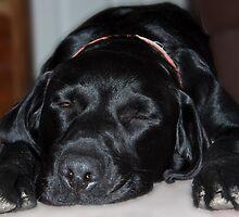 Dog tired!!!! by Shaun Whiteman