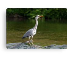 Fishing for din dins Canvas Print
