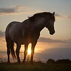 Sunset Delight by Henri Ton