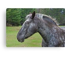 Other Horse Canvas Print