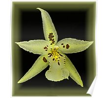 Orchid in a Frame Poster