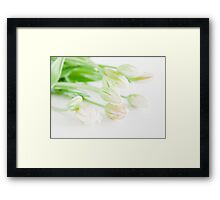 Sunshine Tulips Framed Print