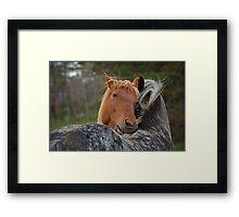 Horse Hug Framed Print