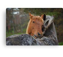 Horse Hug Canvas Print