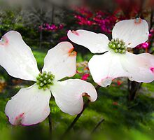 White Dogwood by Poete100