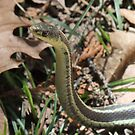 Heads Up! My Snakey Senses Are Tingling!! by Tracy Faught