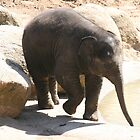 Baby Elephant, Melbourne Zoo, Victoria. by elphonline