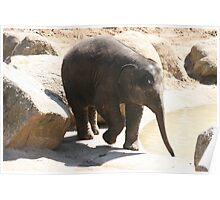 Baby Elephant, Melbourne Zoo, Victoria. Poster
